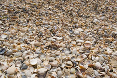 Seashells by the sea. The day off at the beach. Seashells by the sea Royalty Free Stock Images