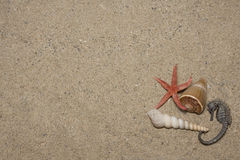 Seashells and sea horse Royalty Free Stock Photos