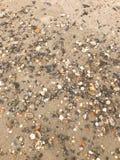 seashells seashell собрания предпосылки близкие вверх Стоковое фото RF