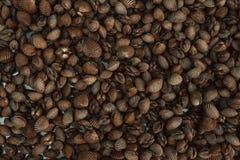 seashells seashell собрания предпосылки близкие вверх Стоковое Изображение RF