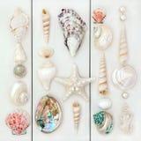 Seashells Royalty Free Stock Photos