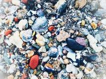 Seashells. O the Thessaloniki beach stock images