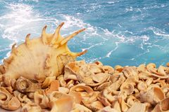 Seashells. On the sea background royalty free stock photography