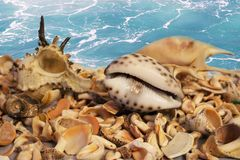 Seashells. On the sea background royalty free stock photo