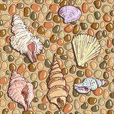 Seashells on the seashore Royalty Free Stock Photo