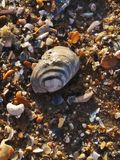Seashells on the seashore royalty free stock photo