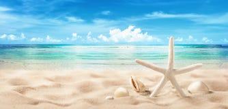 Seashells on Seashore Close Up Beach Holiday royalty free stock image