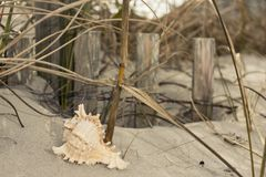 Seashells on the seashore ocean, sand, wave, grass, shoreline, beach, shell, sea. Seashells on the seashore ocean sand wave grass shoreline beach shell sea Royalty Free Stock Image