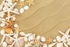 Seashells on the Seashore stock photography