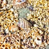 Seashells by the seashore royalty free stock images