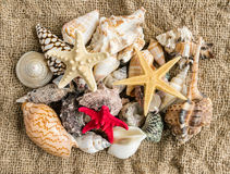 Seashells and seastar on the sand of a beach. Stock Image
