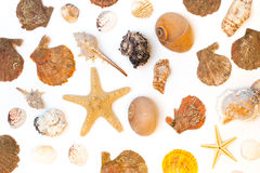 Seashells and seastars isolated on the white background Stock Image