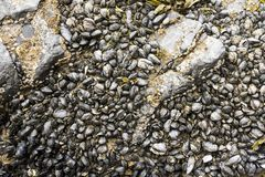 Seashells and seaweed in shallow water. Close up image stock photo