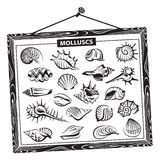 seashells set Στοκ φωτογραφία με δικαίωμα ελεύθερης χρήσης