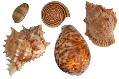 Seashells set Stock Photography