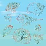 Seashells set on the blurred background, vector. Set of sea shells on the sea blurred background vector illustration royalty free illustration