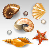 Seashells set. Illustration of seashells set icons Stock Photography