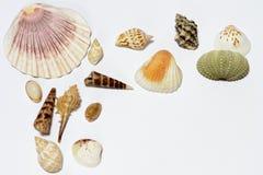 Seashells. Set of seashells isolated on white background royalty free stock photo