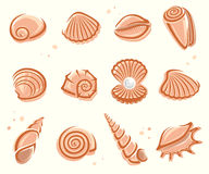 Seashells set. Vector Royalty Free Stock Image