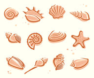 Seashells set. Vector Royalty Free Stock Photography