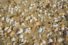 Seashells in the setting sun Stock Photos