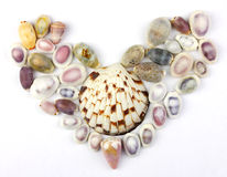 Seashells in the shape of heart Stock Image