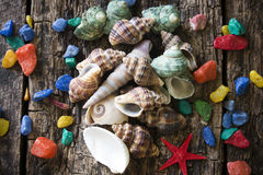 Seashells, shell, clams with colored stones on a wooden Royalty Free Stock Photography