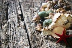 Seashells, shell, shellfish, starfish on wooden background close-up selective focus Royalty Free Stock Photos