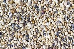 Seashells on the shore Royalty Free Stock Image