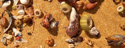 Seashells on the shore. Array of colourful seashells at Swartvlei Beach, Sedgefield, South Africa stock photo