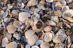 Seashells. On the shore of the Sea of Azov Stock Photo
