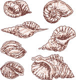 Seashells sketches Royalty Free Stock Image