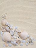 Seashells, snails and corals Royalty Free Stock Images