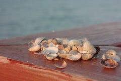 Seashells, Soft Wave Of Blue Ocean On Sandy Beach. Background. stock photos