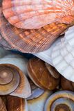 Seashells souvenirs for sale Royalty Free Stock Photography