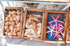 Seashells and star fishes on display in street shop on Symi island Rhodes, Greece royalty free stock photo