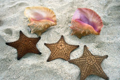 Seashells and Starfish Royalty Free Stock Images