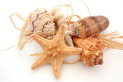 Seashells and starfish. Five different seashells on white background Royalty Free Stock Images