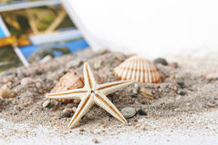 Seashells and a starfish Royalty Free Stock Image