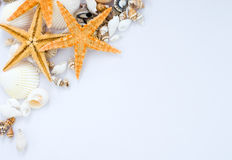Seashells and starfish royalty free stock photos