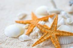 Seashells and starfish Royalty Free Stock Image