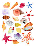 Seashells and starfish. Bright, colorful collection of seashells and starfish. Vector illustration Stock Photos
