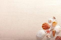 Seashells and starfish Stock Images