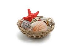Seashells and starfish. Isolated on white background Stock Photography