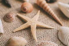Seashells and starfish background. Many different seashells piled together