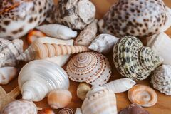 Seashells and starfish background. Many different seashells piled together. Ocean life.