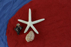 Seashells and starfish Royalty Free Stock Photos