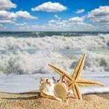 Seashells and starfish on a beach sand Royalty Free Stock Photo
