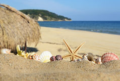Seashells and starfish on a beach sand Stock Images