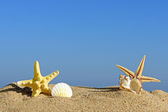 Seashells and starfish on a beach sand Royalty Free Stock Photography